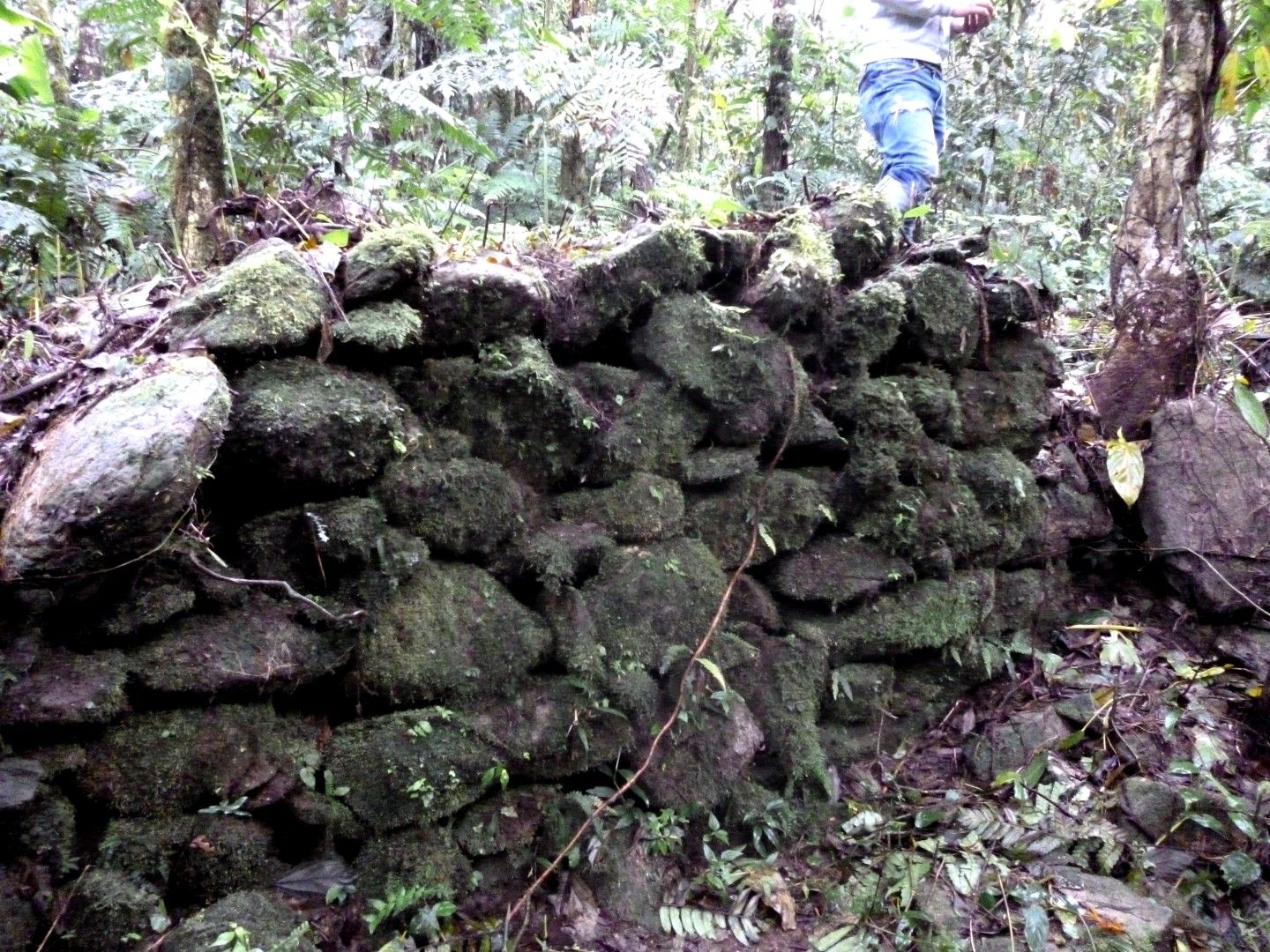 Ancient construction in the middle of the jungle made by the Cañari using and stones