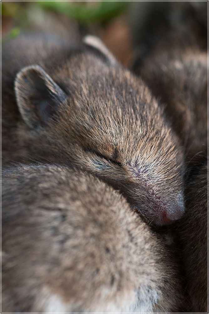 Gemutlich Susseste Haustiere Ausgestopftes Tier Tiere