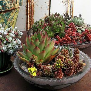 Decorate for the holidays in modern style gardens for Succulent dish garden designs