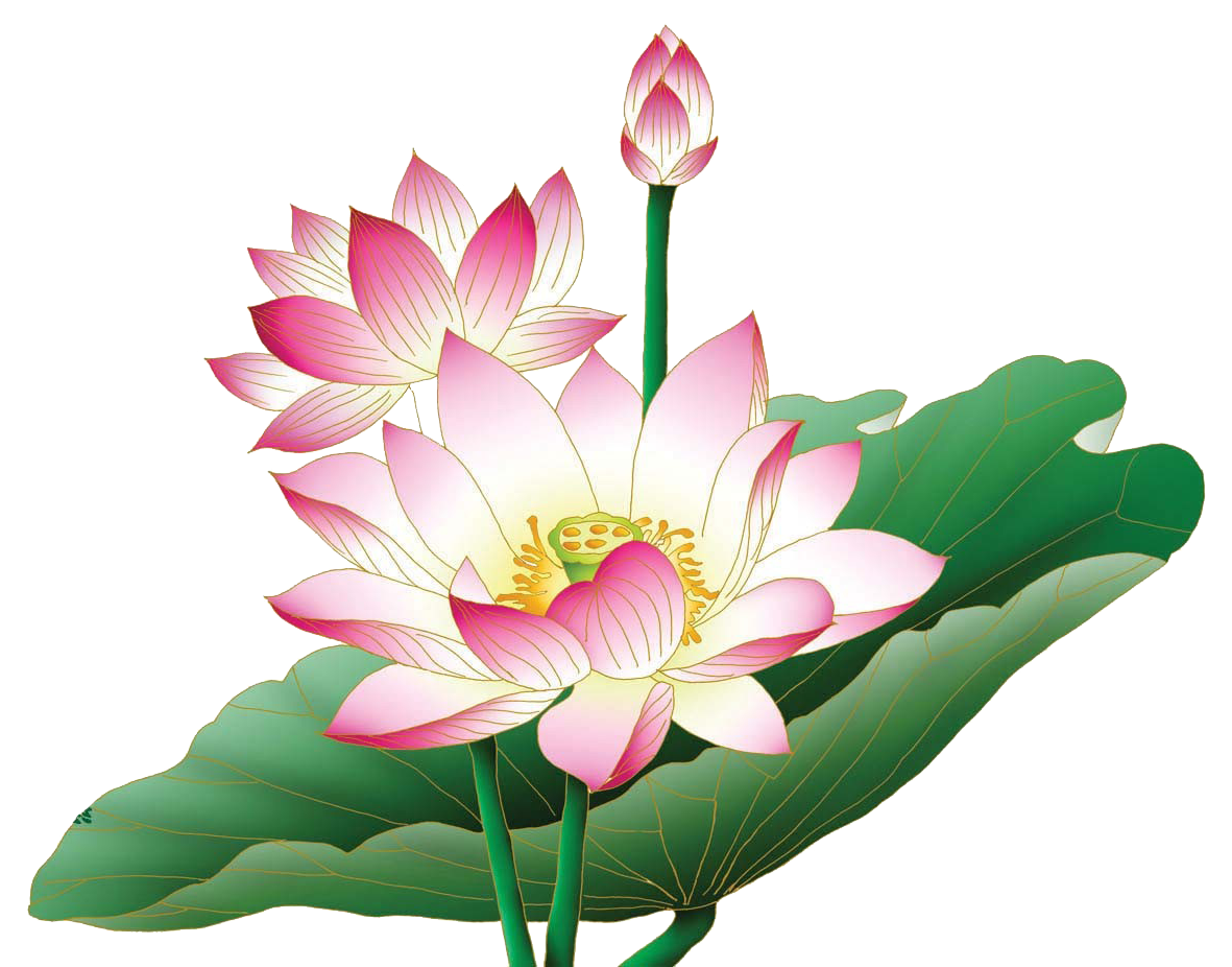Related image (With images) Lotus, Flowers, Wedding cards