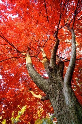 Dance Like a Tree.