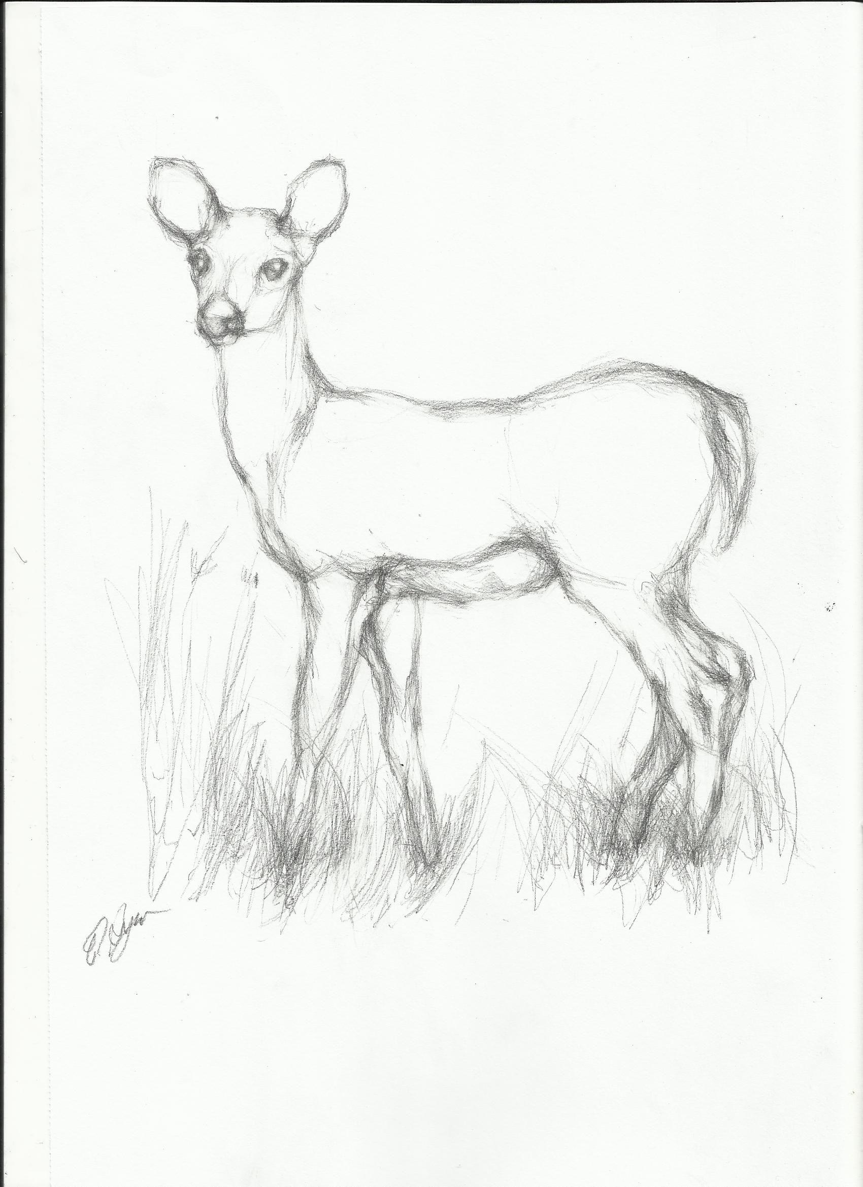 Animal sketches in pencil animals