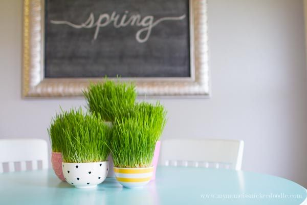 How To Grow Easter Grass Growing Grass Grass Decor Spring Projects