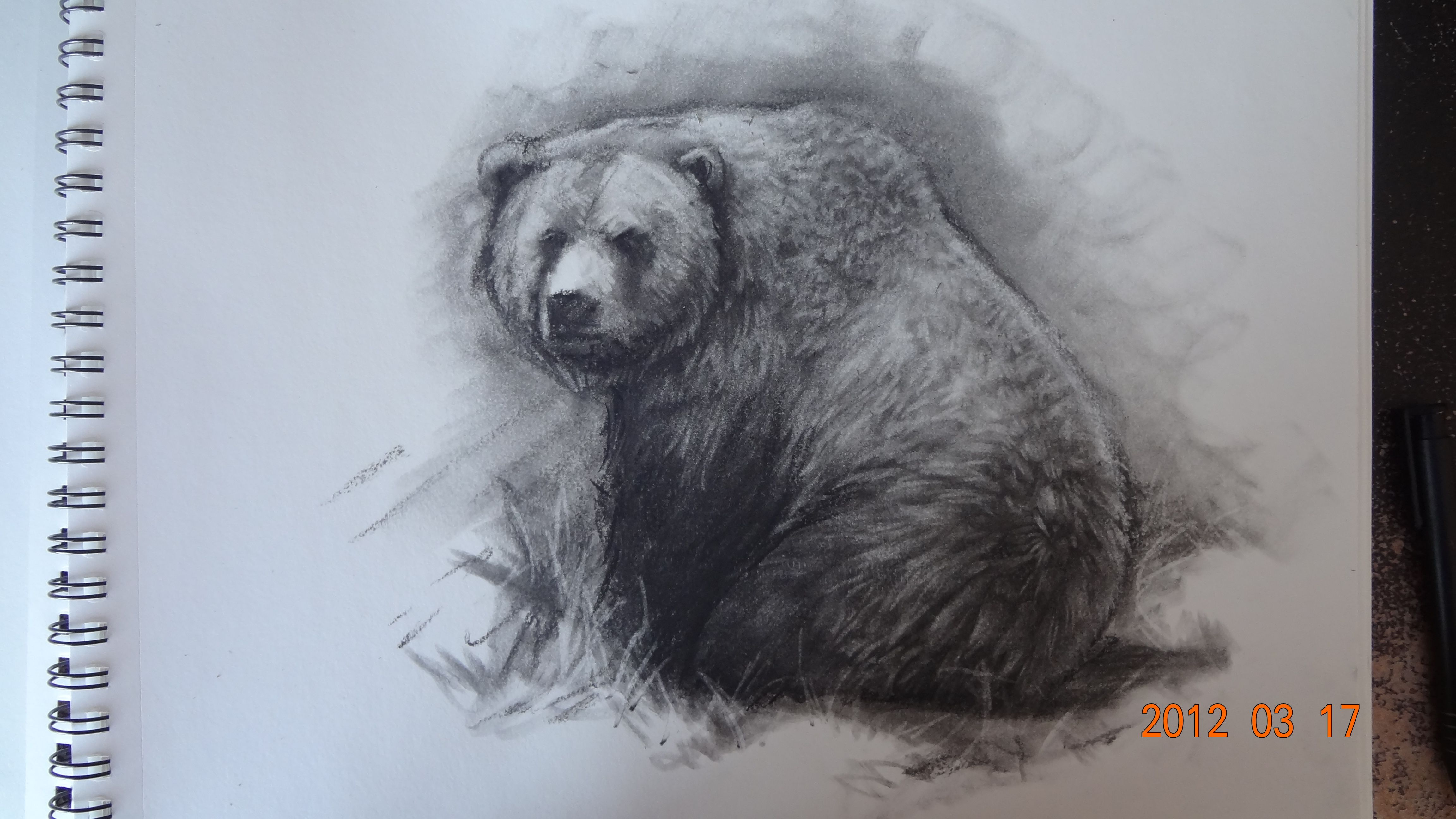 Grizzly Bear Pencil Drawings