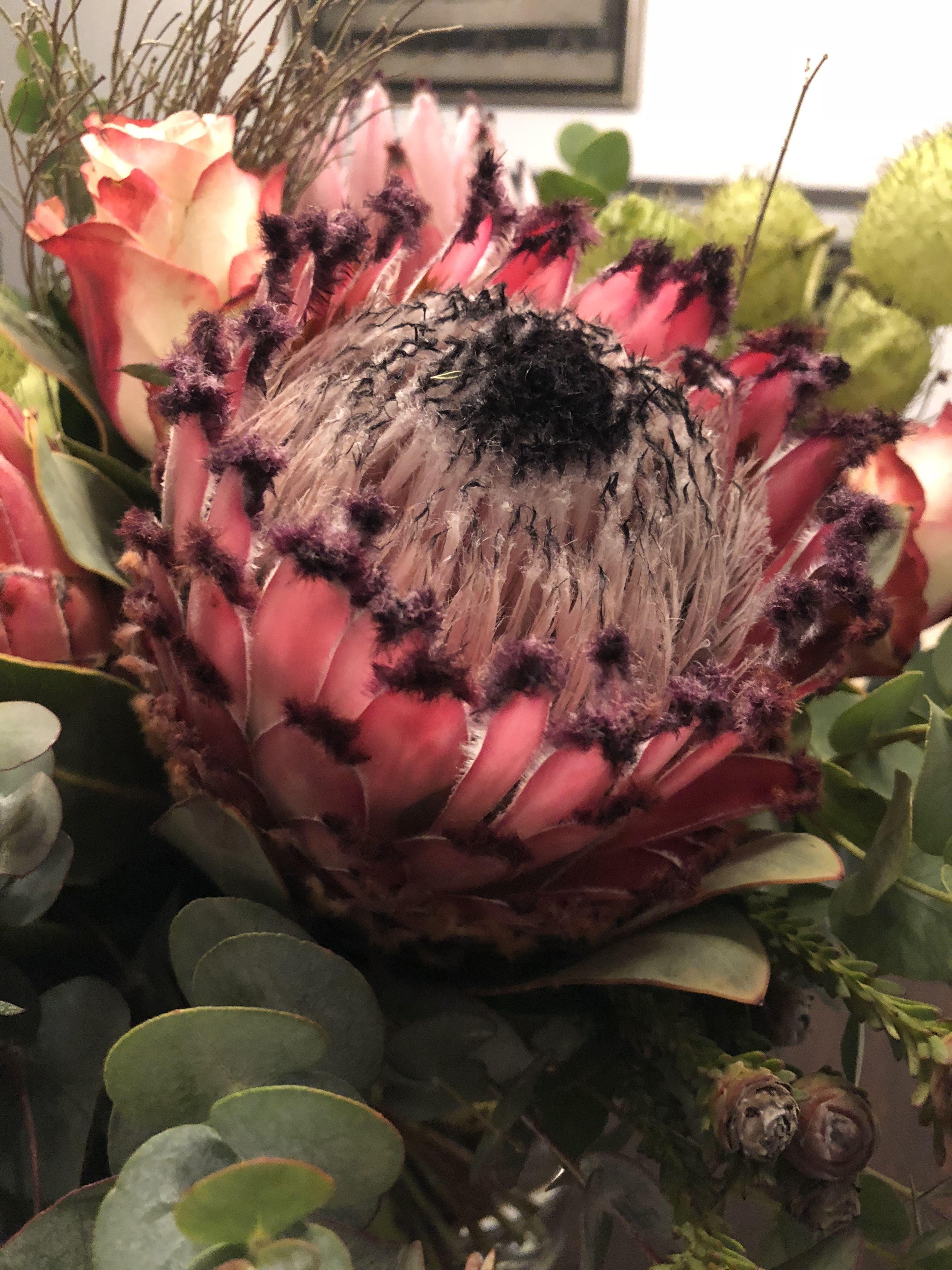 Protea Blumenstrauß, Blumenbotschaft Vier Jahreszeiten, 53359 Rheinbach, Nadine Samulewitz, Floristenmeisterin, Blumen für jeden Anlass, Daniela Katzenberger Hochzeit uvm...