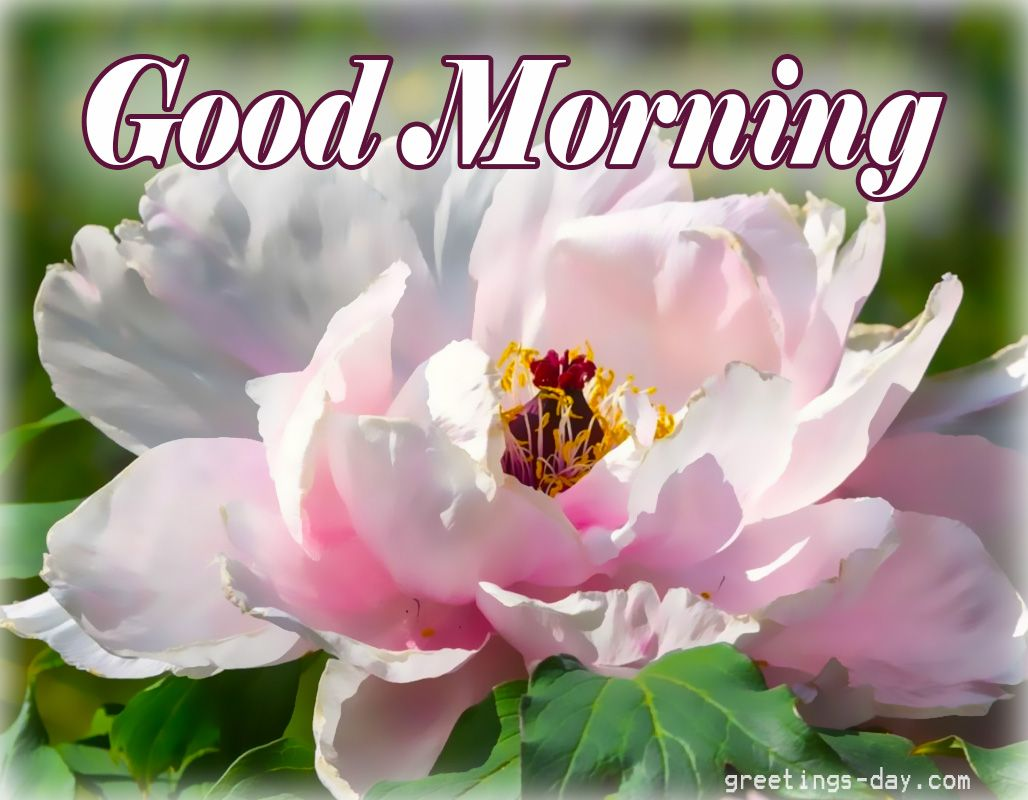 Good Morning Flowers Quotes : Good morning free pics gifs and quotes goodmorning
