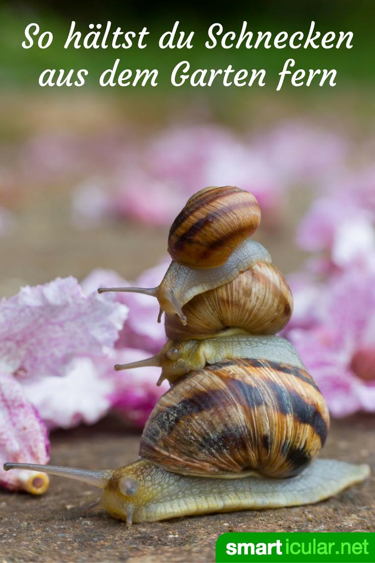 Mit Diesen Tricks Meiden Schnecken Deine Gemusebeete Schnecken Im Garten Garten Gemusebeet