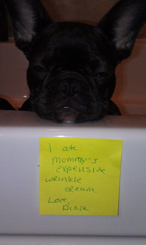 Don T Eat Wrinkle Cream Gross Dogshame Dog Shaming Funny Dog