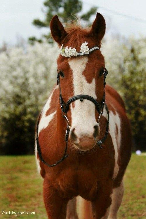 صور حصان صور خيول عربية أصيلة صور خيل Horse Names Horses Pretty Horses