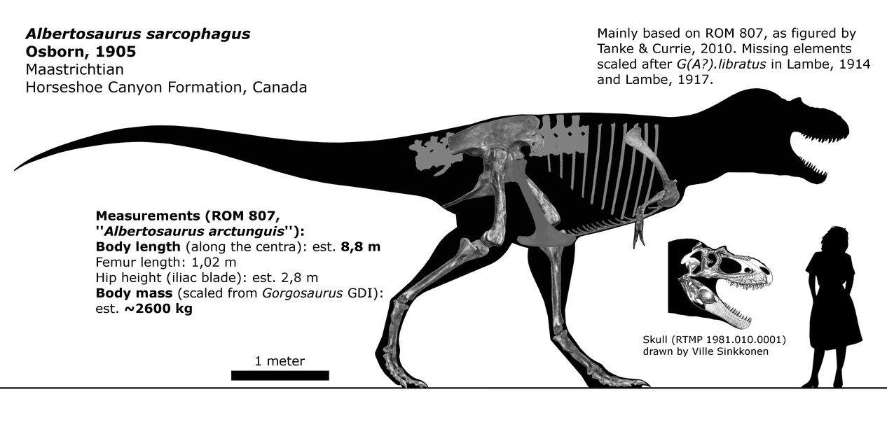 12++ Albertasaurus ideas