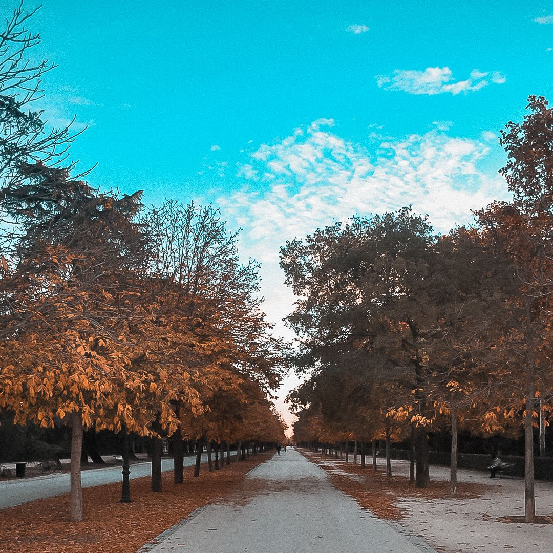 Photo of my last days in the #parquedelretiro, while I went jogging in the mornings I enjoyed spectacular views of a beautiful autumn, which before that day I had only been able to enjoy through movies or series.😍🍂 #parque_del_retiro #autumn #españa #madridespaña #photographyspain #retiroparkspain #jogging #fotografiadeviaje #phototravel #parks #madridspain #running #fotografiaenespaña #photospain #nikon #d3000 #nikonista