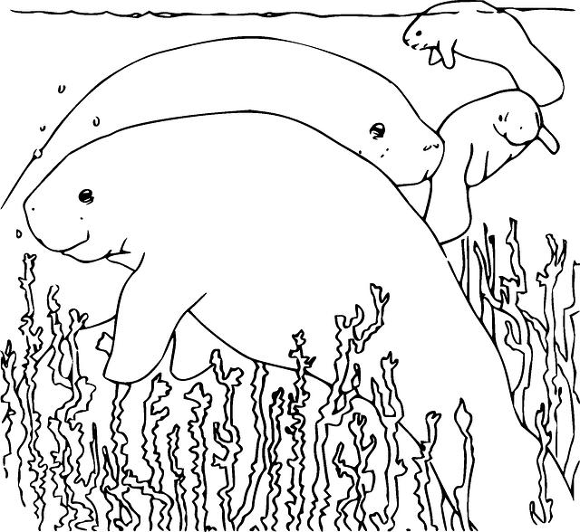 Free Image On Pixabay Manatee Underwater Sea Marine Manatee Animal Coloring Books Coloring Books