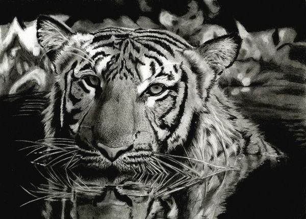 10 Cool Tiger Drawings For Inspiration