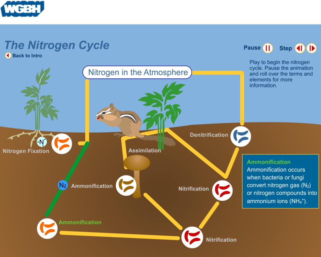 Nitrogen Cycle 5e Lesson Plan