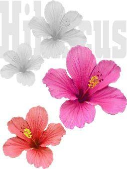 Free Hibiscus Clip Art Hibiscus Flower Clip Art Free Hibiscus