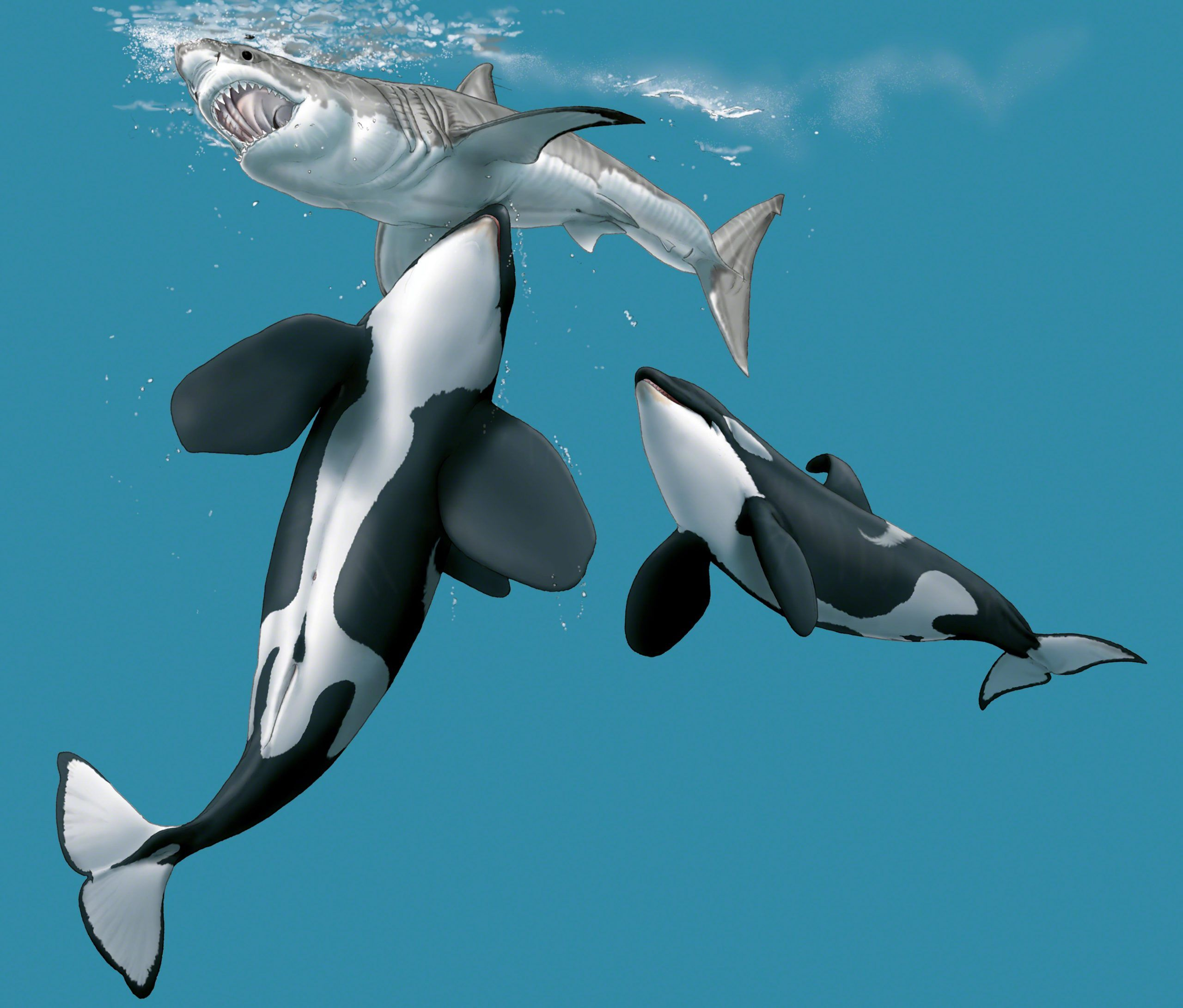 Killer whales coordinate an attack aiming at the - Difference between starboard and port ...