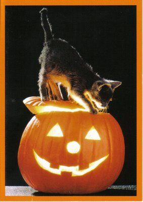 A Gallery Of Halloween Cats For Your Viewing Pleasure Halloween Cat Cat Vs Dog Munchkin Cat