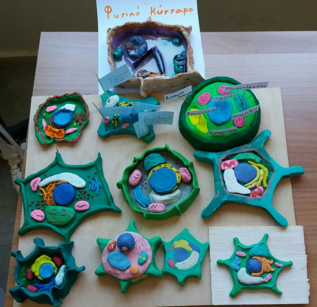 Plant Cells School Projects