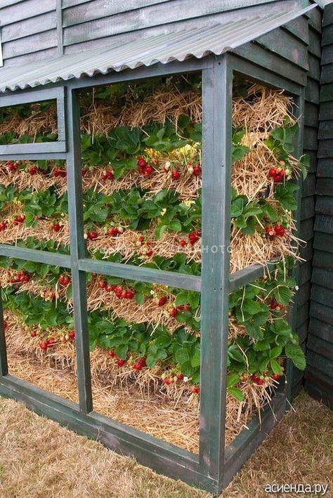 подвесные грядки для клубники в теплице