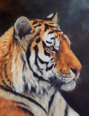 TIGER Superb New DAVID STRIBBLING Oil Painting