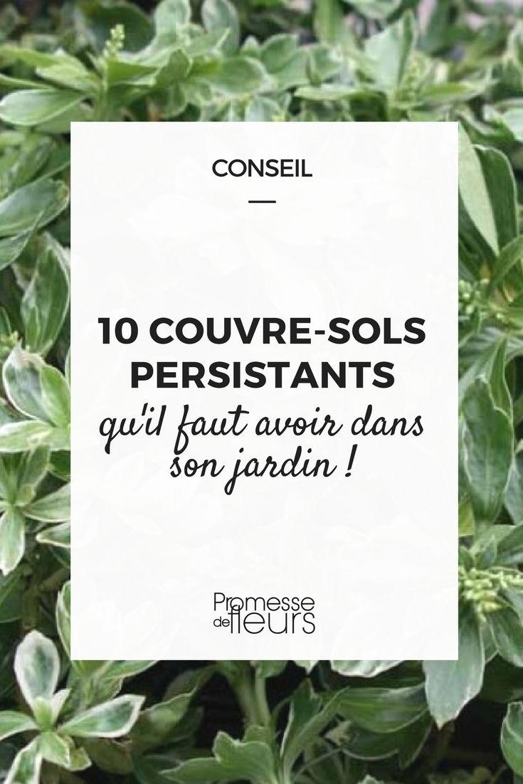 Arbuste Terrain Sec Ombre 10 couvre-sols persistants qu'il faut avoir dans son jardin