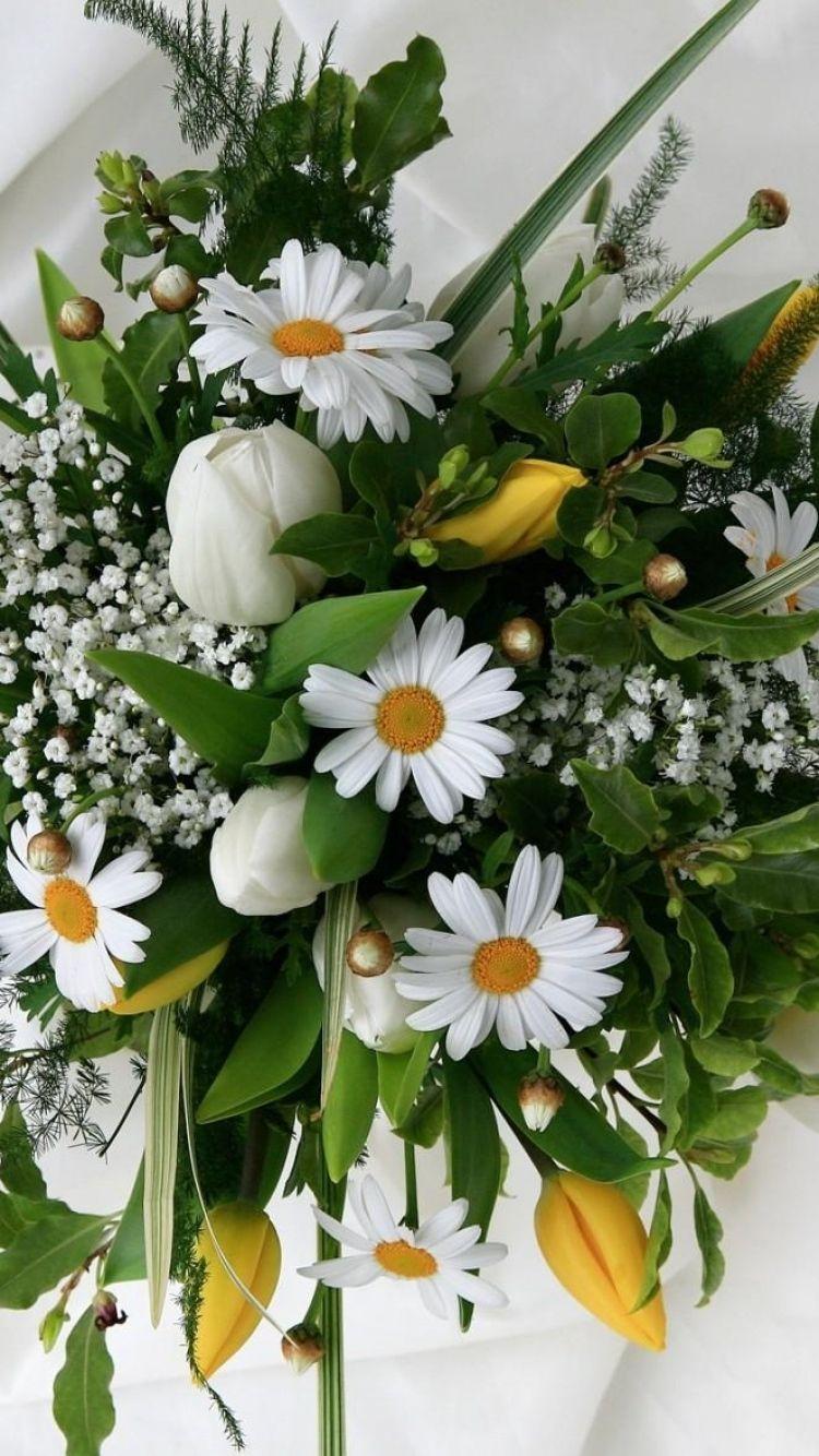 Картинки с цветами ромашки тюльпаны