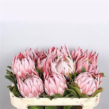 Proteas Wholesale Flowers Uk Wedding Flowers Protea Wholesale Flowers Event Flowers Unusual Flowers