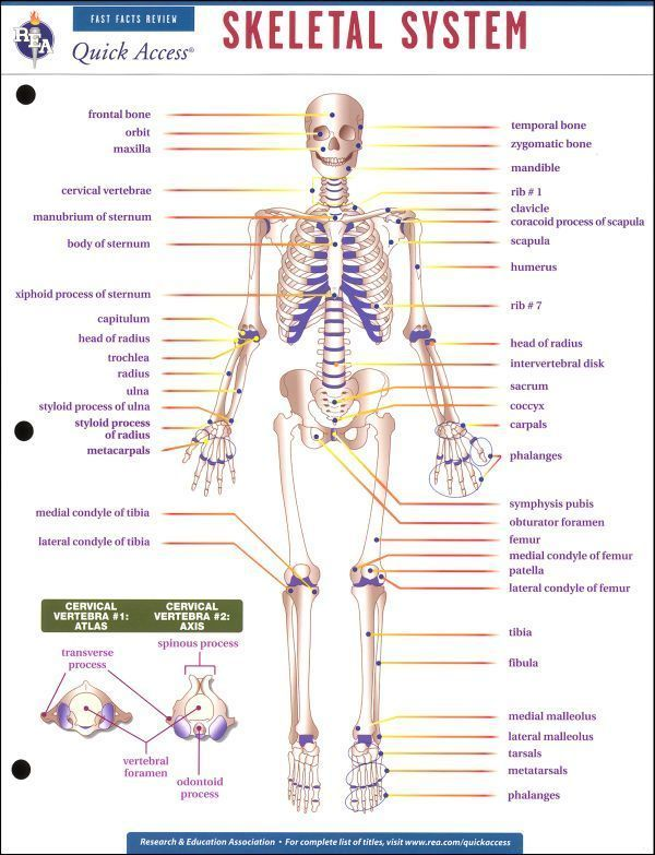 High School Art Worksheets | Human Body Skeletal System Learning ...