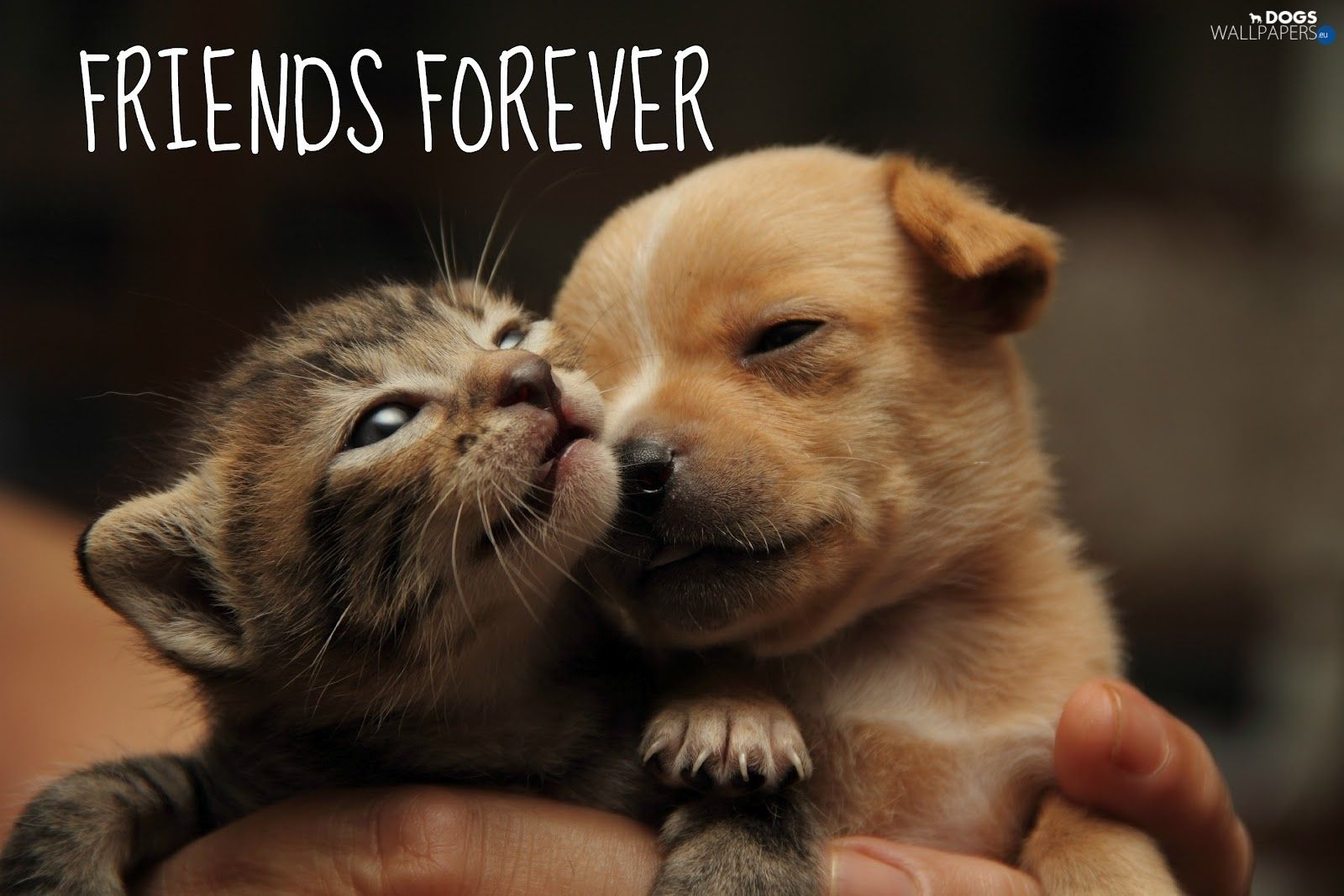 Kitten And Puppy Wallpaper Android Apps On Google Play Kittens And Puppies Puppies Puppy Wallpaper