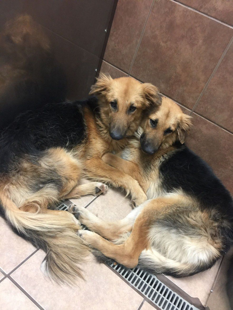 Dog Best Friends Hug Each Other After Being Dumped At Shelter - These two stray puppies were just rescued and they refuse to stop hugging each other