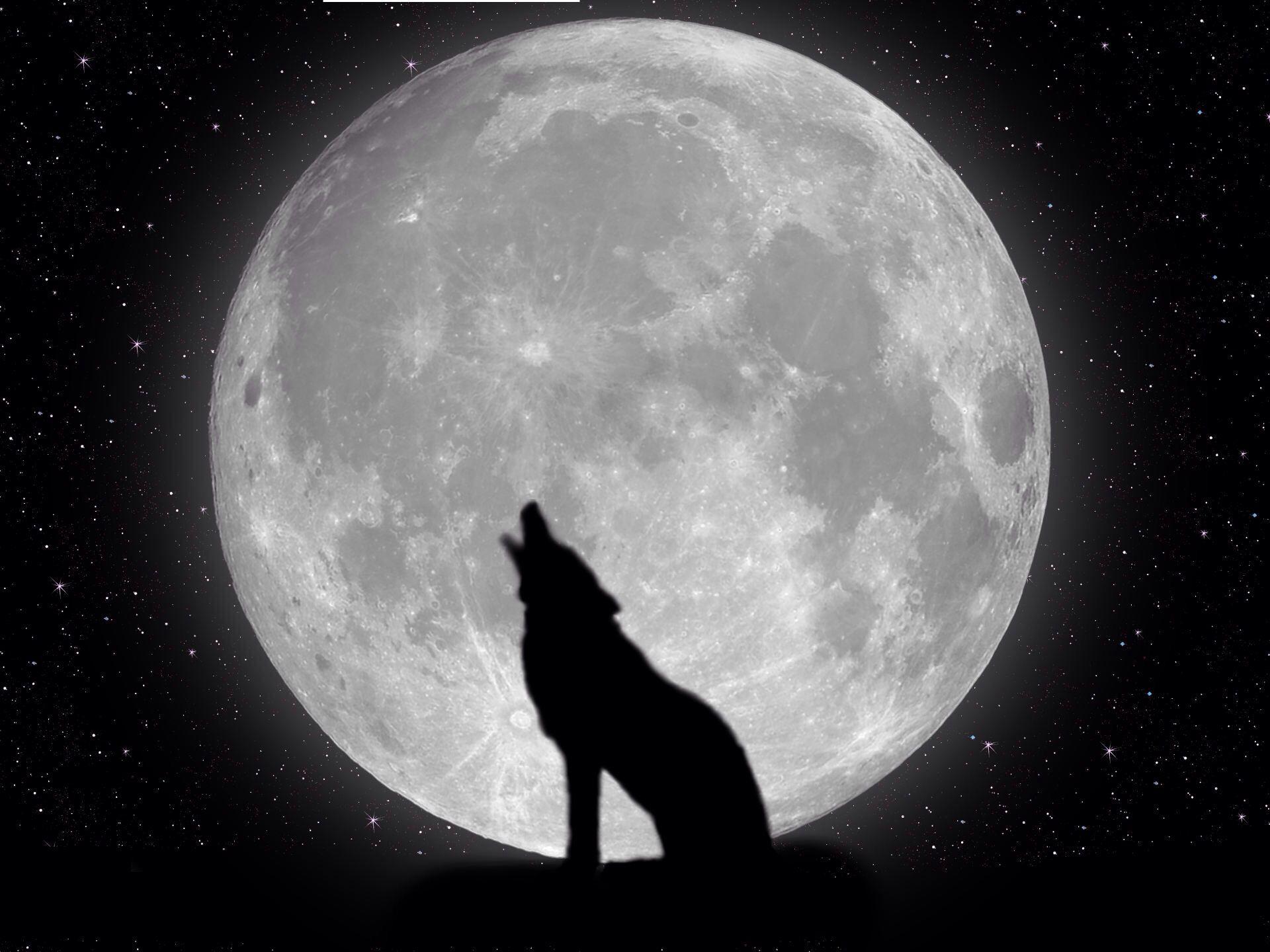 Oui Mon Loup C Est La Pleine Lune Wolf Wallpaper Wolf Beautiful Moon