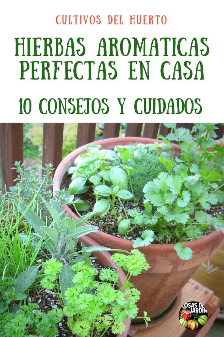 22+ Cultivar hierbas aromaticas en casa ideas in 2021