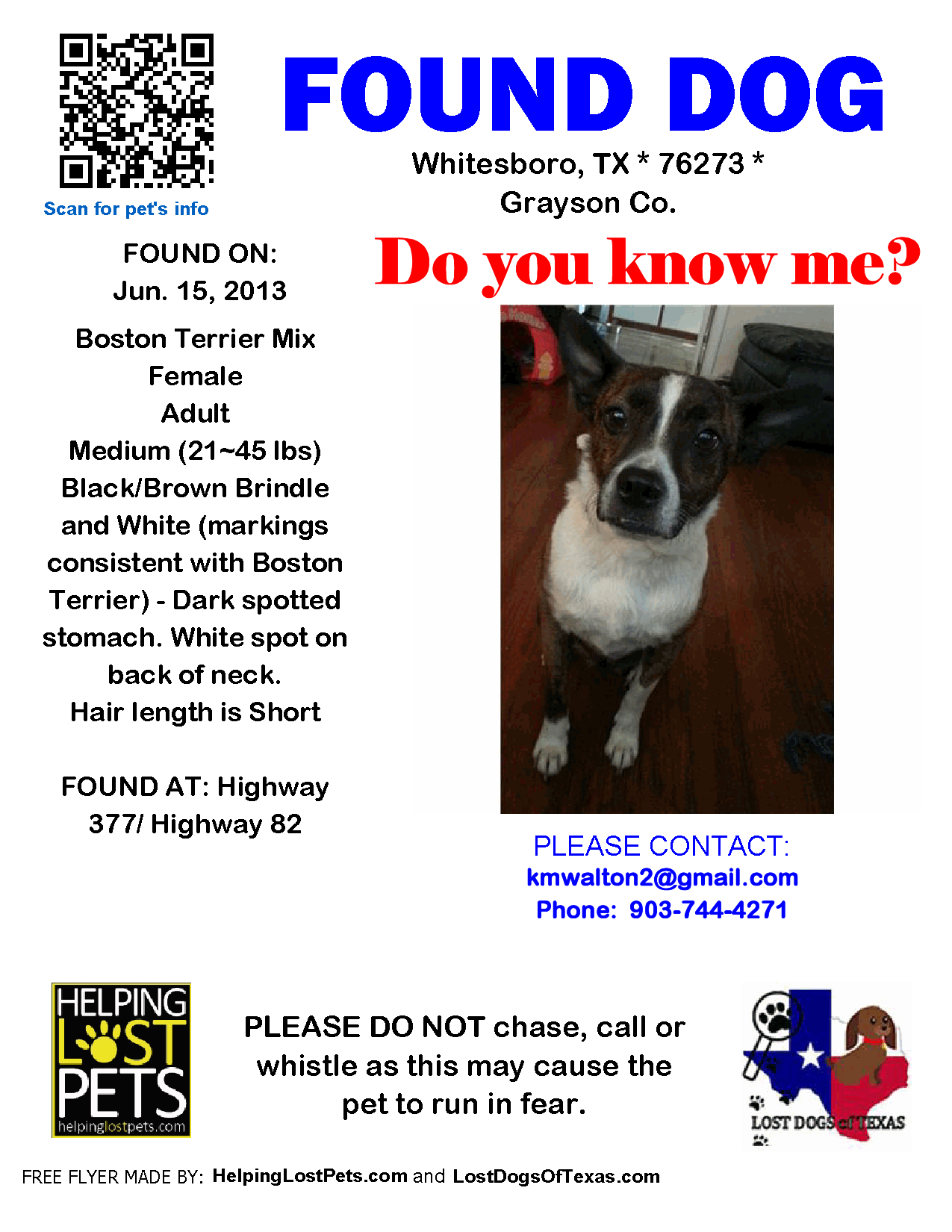Found Dog Boston Terrier Whitesboro Tx United States Boston Terrier Black And Brown Terrier Mix