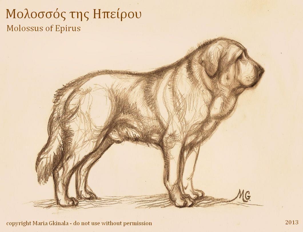 Molossus Of Epirus Species Extinction Lion Sculpture Canine