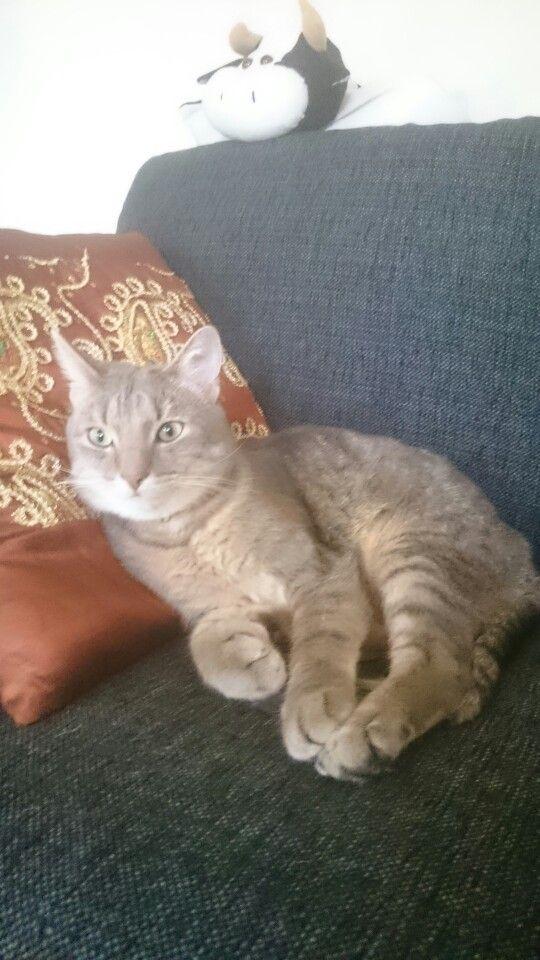 Blingkatten