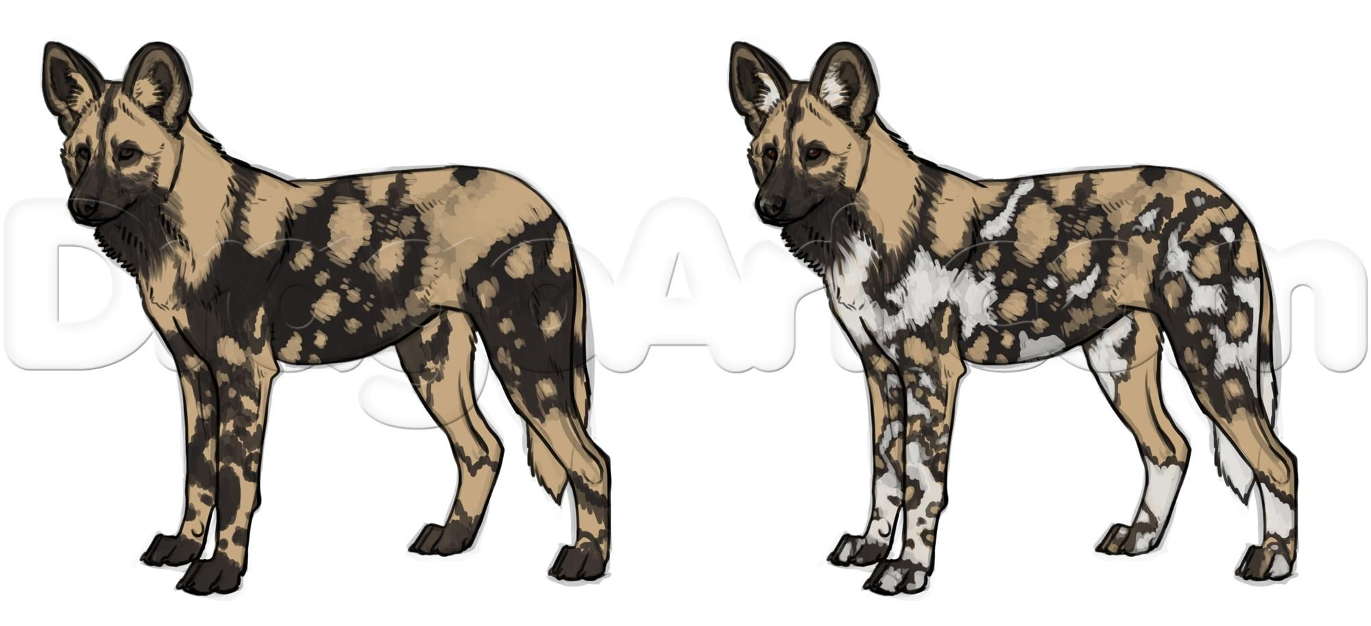 How to draw african wild dogs step 17