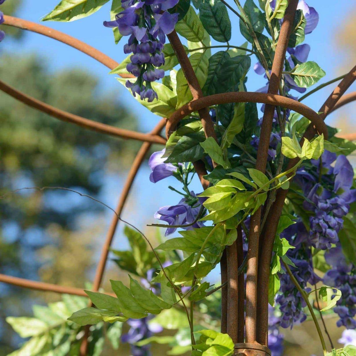 Harrod Wisteria Umbrella Support Frame Climbing Plant Support Plant Supports Wisteria