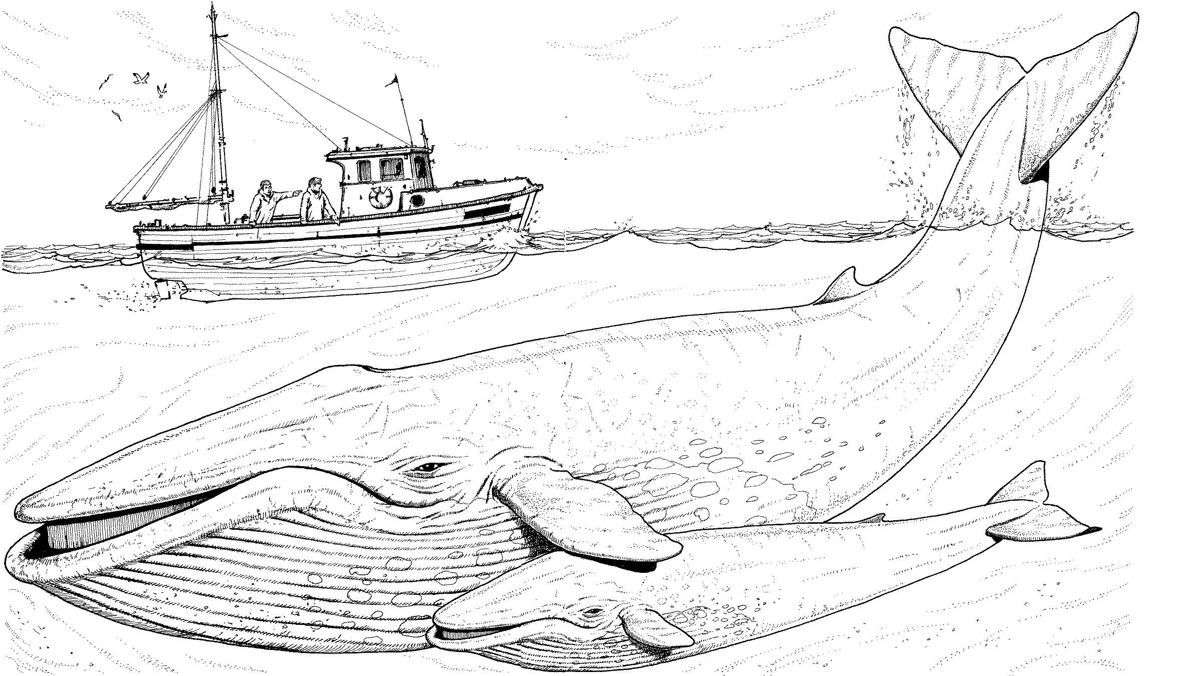 42 Coloring Page Whale In 2020 Whale Coloring Pages Monster Truck Coloring Pages Animal Coloring Pages