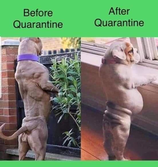 Dangerously Hot Doggo Memes (50 Dog Memes) in 2020 | Dog ...