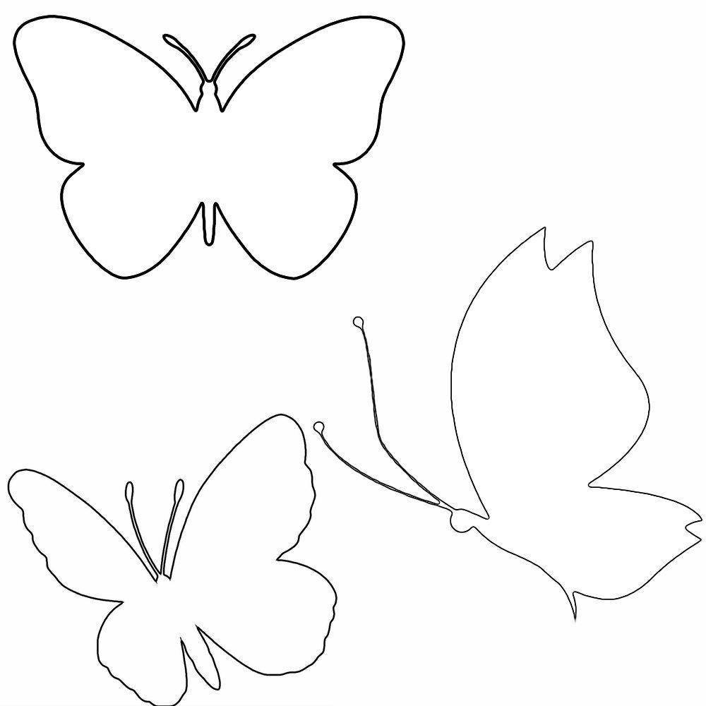 Ozdoba Sali Przedszkola Szkoly Pani Wiosna Z Motylkami Kolorowanie Motyle
