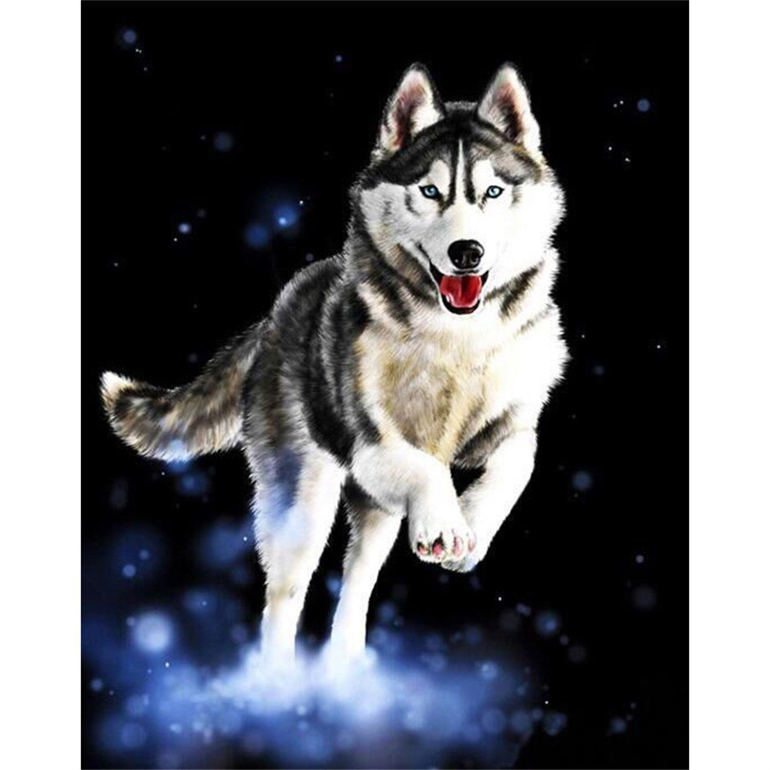 Husky Dog DIY Paint by Number Kit Canvas + Paint + Brush
