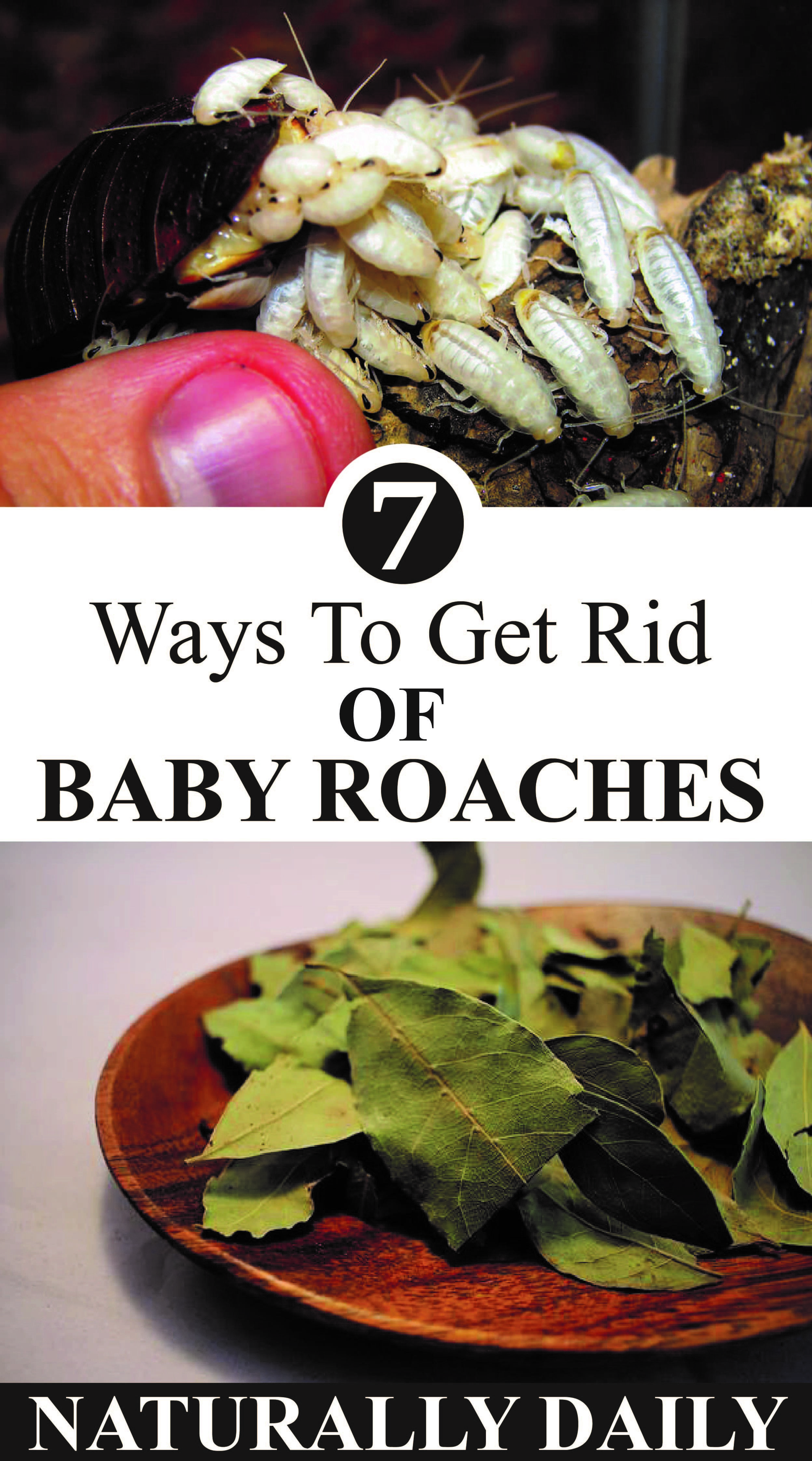 7 ways to get rid of baby roaches in your house naturally