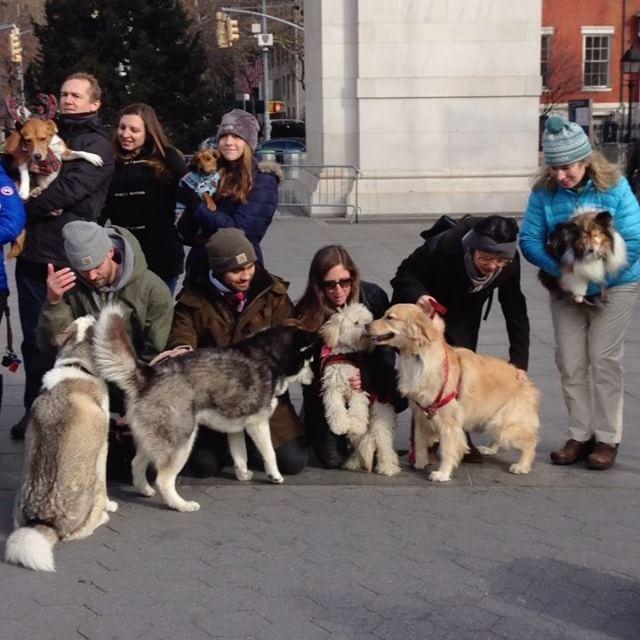 http://washingtonsquareparkerz.com/abbys480-dogmeetup-washingtonsquarepark-nyc/   @abbys480 #dogmeetup #washingtonsquarepark #nyc