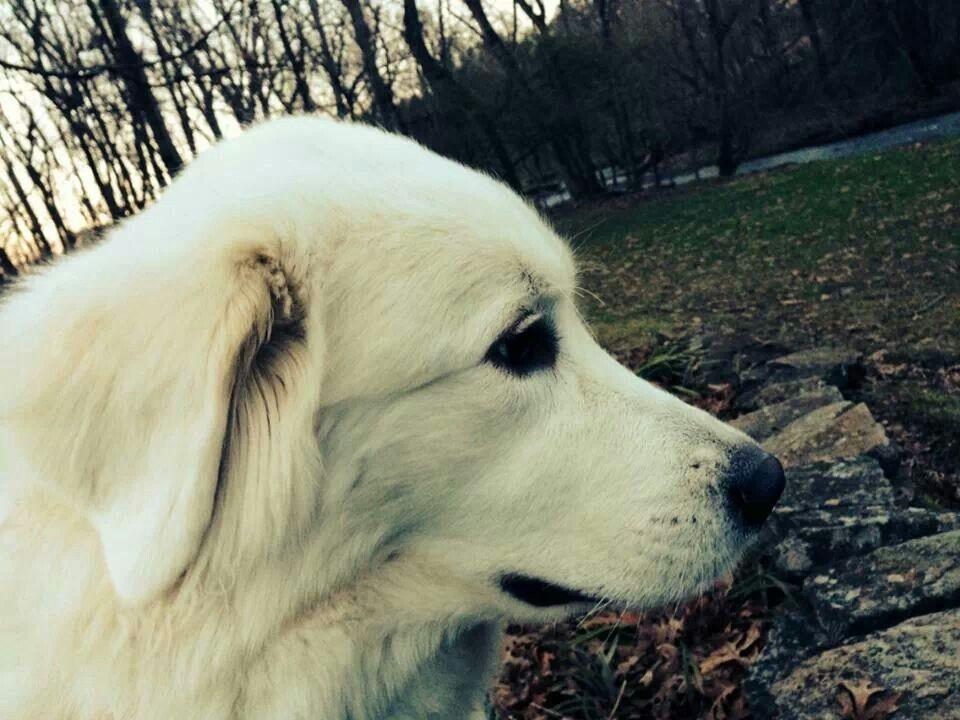 Pin van Laurie Perkins op Puppies (met afbeeldingen) Honden