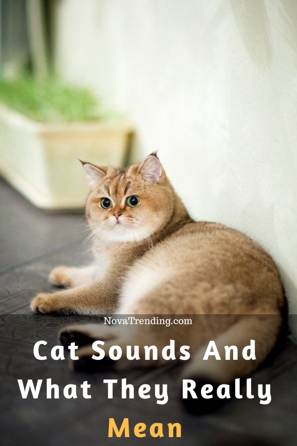 The Weird 6 Cat Sounds Meaning Cats, Dog cat, Cat lovers
