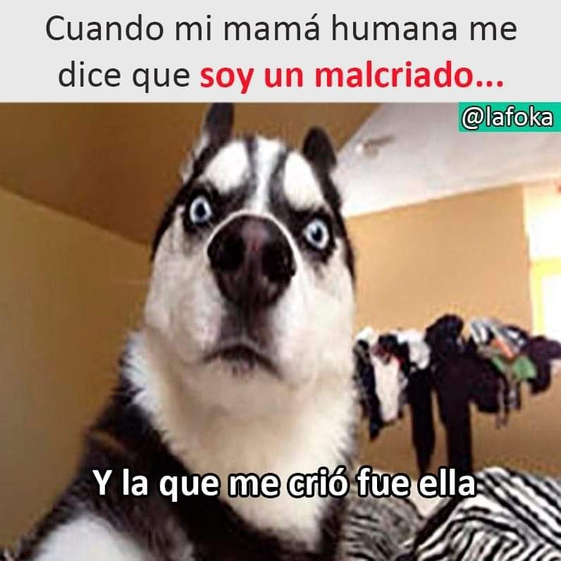Pin By Min Suga On Perritos Cat And Dog Memes Dog Quotes Funny Dog Quotes