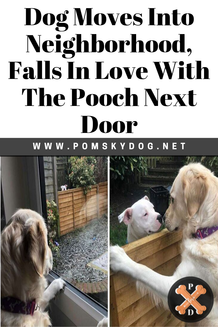 Dog Moves Into Neighborhood Falls In Love With The Pooch Next Door Dogs The Neighbourhood Falling In Love