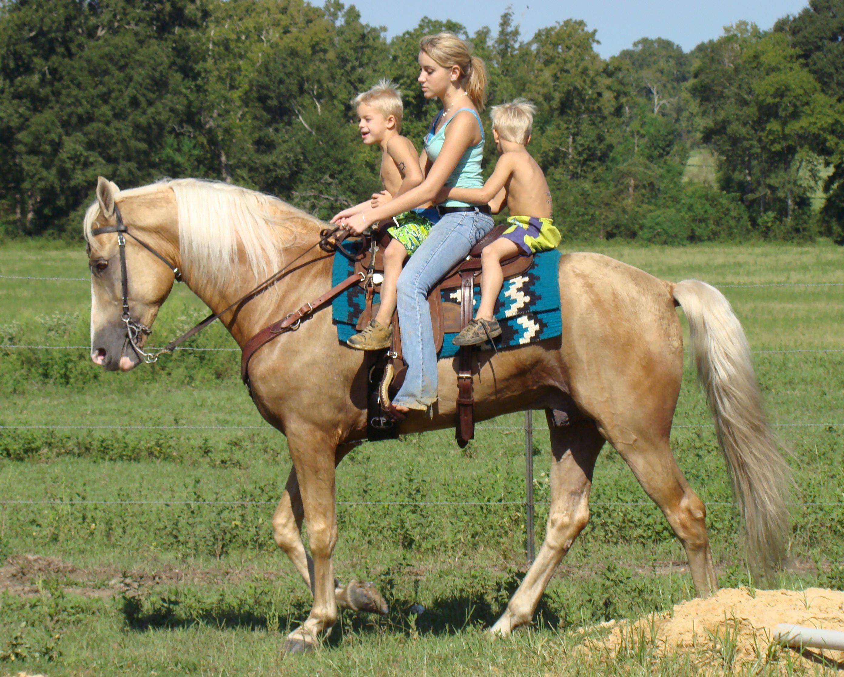 Http Www Cloud9walkers Com Aboutus Htm Horses Palomino Horse Tennessee Walking Horse [ 2234 x 2783 Pixel ]
