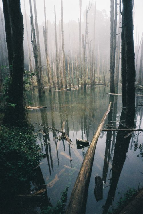(3) i wanna live in the middle of a forest with a lake as mesmerizing and subtly gorgeous  as this.