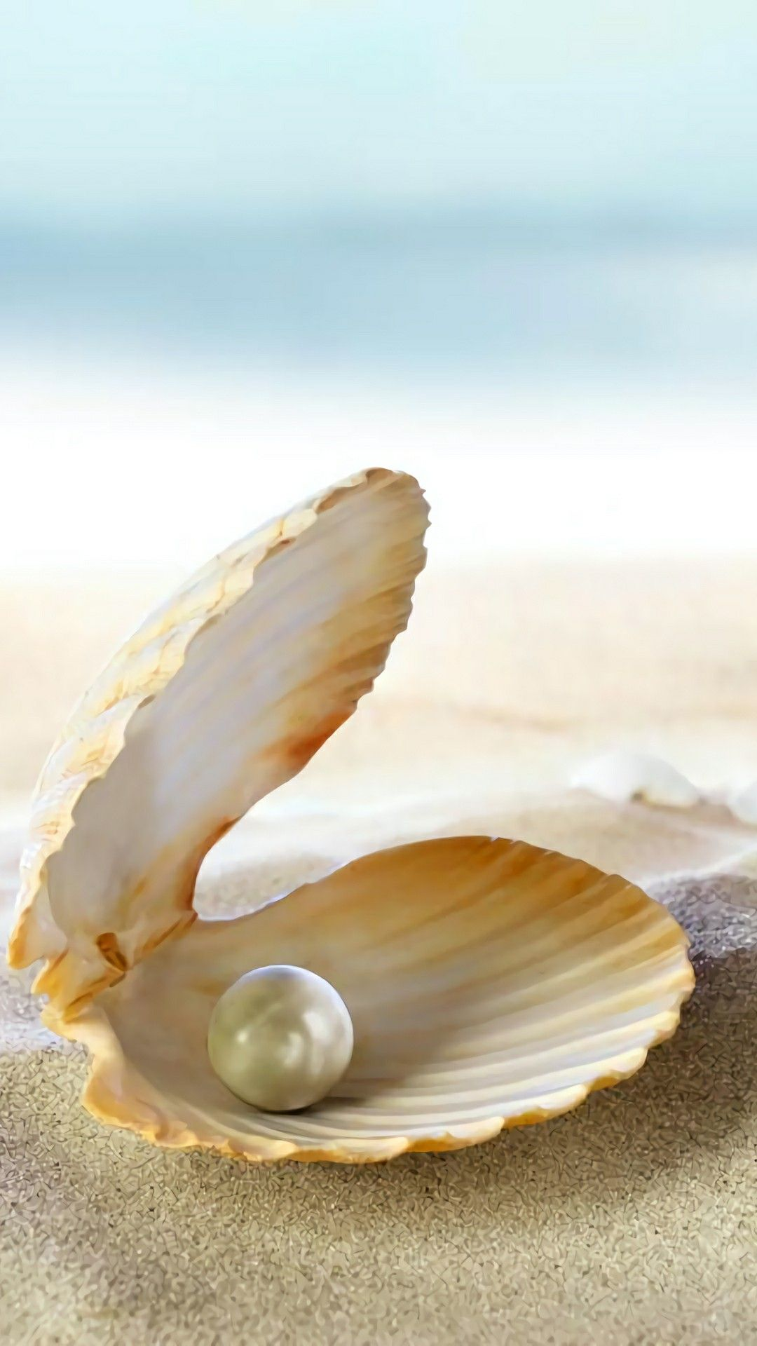 Pin By Marcelomartinezrg On Dream Body Pearl Paint Clams Clam Pearl